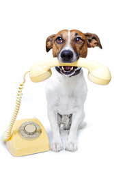Ветеринарные препараты для животных,  оптом
