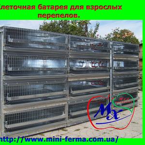 Оборудование для содержания перепелов  (клетки).