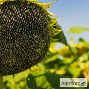 Купити насіння соняшнику,  засоби захисту рослин та добрива