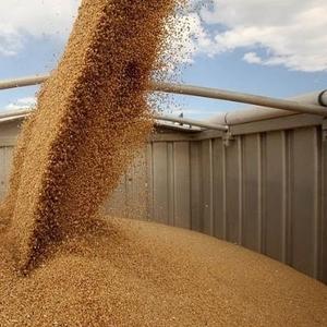 Закупаем зерновые и масличные 0677516311